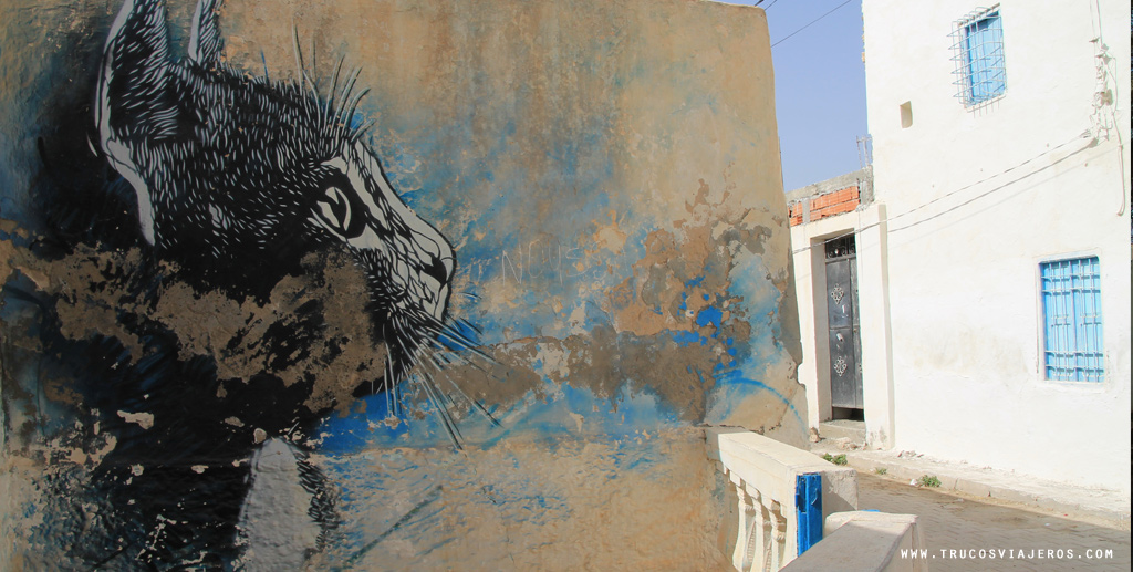 Djerba cat graffiti Tunisia